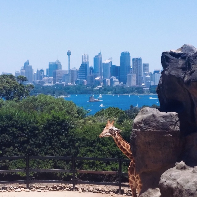 Giraffes view of Sydney